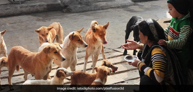Two Girls From J&K's Udhampur Are Feeding Stray Dogs Daily During The Lockdown