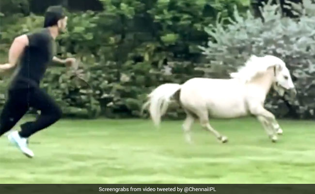 MS Dhoni takes part in a race against his horse, Sakshi shares adorable video on Instagram