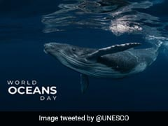 World Oceans Day 2021: Plastic Waste And India's Awareness Campaign