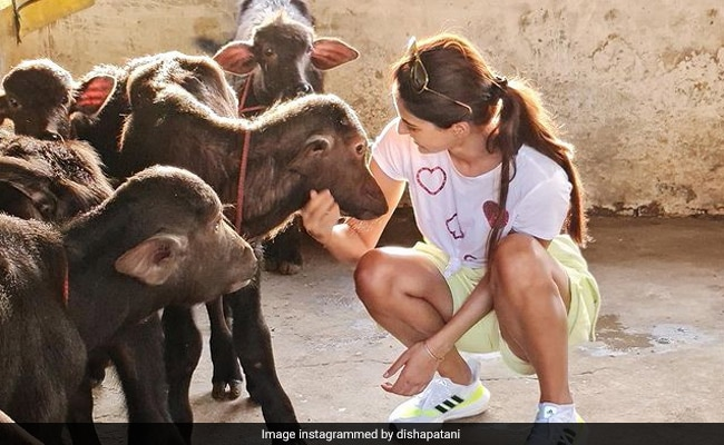 Disha Patani Is A True Animal Lover. Proof? These Pics