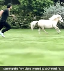 Watch: MS Dhoni Enjoys 'Playtime' With A Pony, Wife Sakshi Shares Video