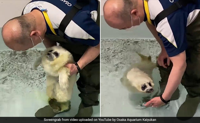 This Video Of A Baby Seal's First Swim Lesson Will Melt Your Heart Into A Puddle