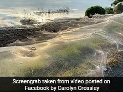Parachuting Spiders Leave Australian Region Covered In Webs