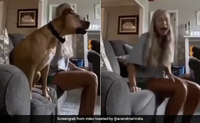 Anand Mahindra Shares ROFL Video Of Dog Watching Soccer. Laughter Guaranteed
