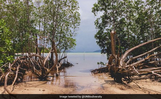 World Environment Day 2021: Theme, Significance And All You Need To Know