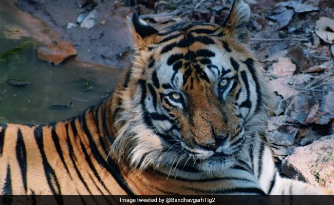 Ramgarh Sanctuary: Know All About India's 52nd And Newest Tiger Reserve