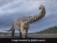 """This Is """"Cooper"""", Australia's Largest Dinosaur Identified As New Species"""