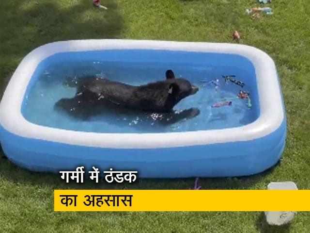 Video : बच्चों के पूल में आनंद लेता और खिलौनों से खेलता मिला भालू, देखें