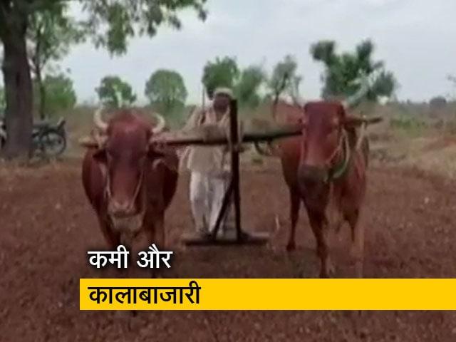 Video : मध्य प्रदेश में सोयाबीन के बीजों का संकट गहराया, किसानों में फूटा गुस्सा