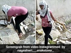 घर के पीछे छिपा था सांप, लड़की ने पकड़ी पूंछ तो छटपटाकर किया ऐसा - 80 लाख बार देखा गया VIDEO