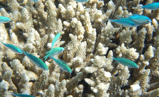 World Oceans Day 2021: Theme And 10 Facts On Oceans