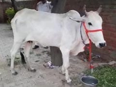 """""""Cow Protection Should Be Fundamental Right"""": Allahabad High Court Order"""