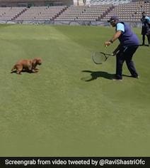 WTC Final: डॉगी 'विंस्टन' को टेनिस प्रैक्टिस कराते दिखे कोच रवि शास्त्री- Video