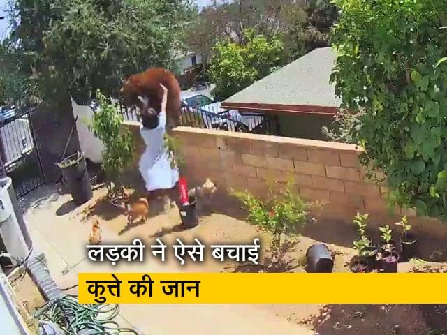 Video : वायरल वीडियो : अपने कुत्ते को बचाने के लिए लड़की ने भालू को दिया धक्का