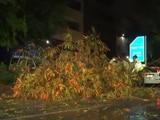Video : Trees Uprooted As Heavy Rainfall Hits Delhi