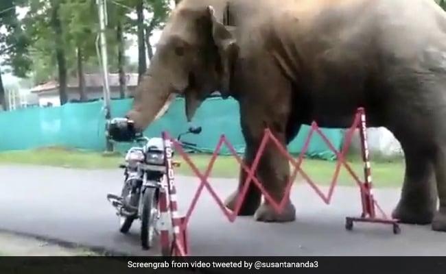 Curious Elephant Comes Across A Helmet. Watch What Happens Next