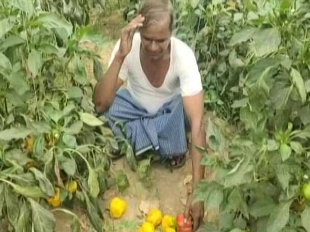Video : Vegetable Farmers Hit Hard By Covid In Delhi-NCR