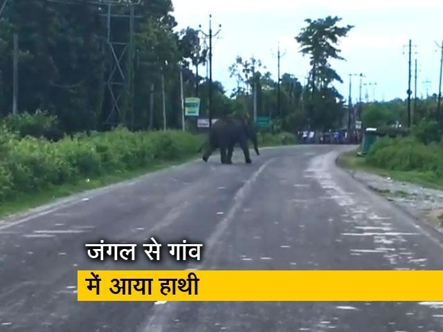 Video : बंगाल के जलपाईगुड़ी में गांव में घुसा जंगली हाथी, नष्ट किया चाय बागान