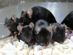 """Mouse Sperm Stored On International Space Station Produces Healthy """"Space Pups"""""""