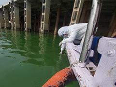 वाराणसी: गंगा नदी में तैर रहे 'हरे शैवाल' के लिए जिम्मेदार कौन? रिपोर्ट में सामने आई बात