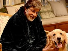 "ICYDK: Amitabh Bachchan's New ""Co-Star"" Is Wait For It... A Doggo"