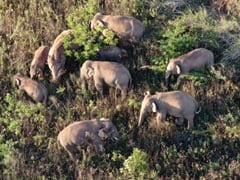 Injured Baby Elephant Abandoned By Rogue Herd In China Saved