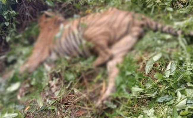 Kaziranga Staff Suspended For 'Unwarranted Firing' That Killed A Tiger