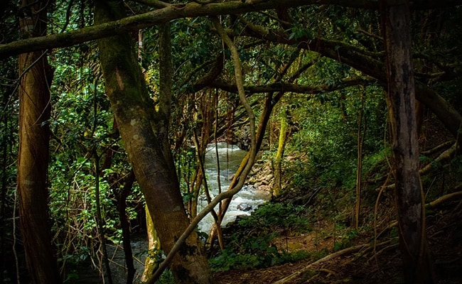 World Rain Forest Day 2021: What Are Rainforests? Key Facts To Know