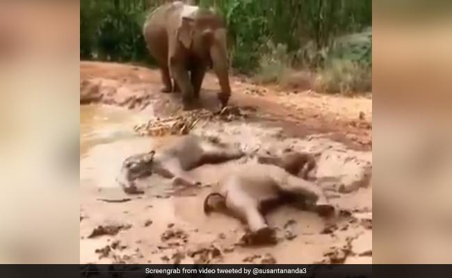 हाथी के बच्चों ने पानी से भरे गड्ढे में की मस्ती, लेटकर ऐसे लिया Mud Bath, Video ने जीता लोगों का दिल