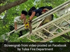 Watch: He Climbed A Tree To Rescue Cat. Firefighters Had To Rescue Him