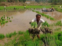 Union Cabinet Clears Hike In Minimum Support Price For Rabi Crops