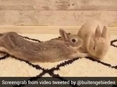 खरगोशों का ये Cute Kiss लोगों को अपने रोमांटिक दिनों की याद दिला रहा है - देखें Video