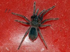 Over 100 Live Spiders Found Crawling Inside Parcel By Chennai Customs