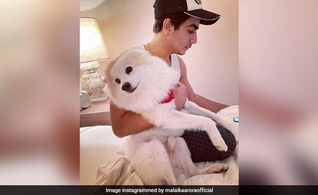 "What Sums Up Malaika Arora's ""Life"" - Son Arhaan Khan And Dog Casper"