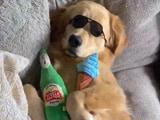 Video: सोफे पर लेटकर स्टाइल में सो रहा था कुत्ता