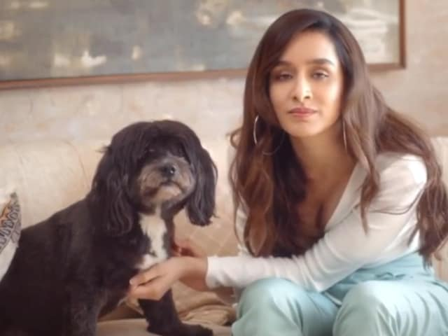 Video : Shraddha Kapoor Supports Stray Dogs, Emmy Nominations And More