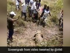 12 फुट लंबे मगरमच्छ का ऐसे किया गया रेस्क्यू, स्थानीय लोगों ने वन विभाग को सौंपा - देखें Viral Video