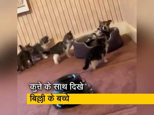 Video : बिल्ली के कुछ बच्चे ग्रुप में कुत्ते के पास बैठे दिखे, वीडियो वायरल
