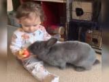 Video: बच्चे के हाथ से सेब लेकर भागा खरगोश और फिर