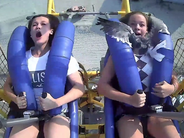 Video : Watch: Seagull Hits Teen In The Face As She Rides Roller Coaster