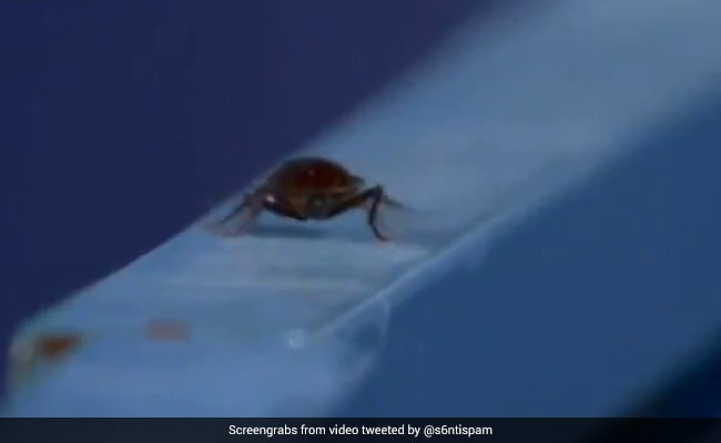 Watch: Cameraman Films Bug Instead Of Olympic Hockey Match, Twitter In Splits