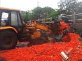 Video : Watch: Earthmover Clears Tonnes Of Tomatoes Scattered On Mumbai Highway