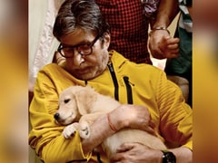"""Amitabh Bachchan Almost Defied A Family """"Protocol"""" For His New Co-Star - This Adorable Fur-Ball"""