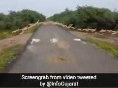 """""""Excellent"""": PM Shares Video Of """"Over 3000 Blackbucks"""" Crossing A Road"""