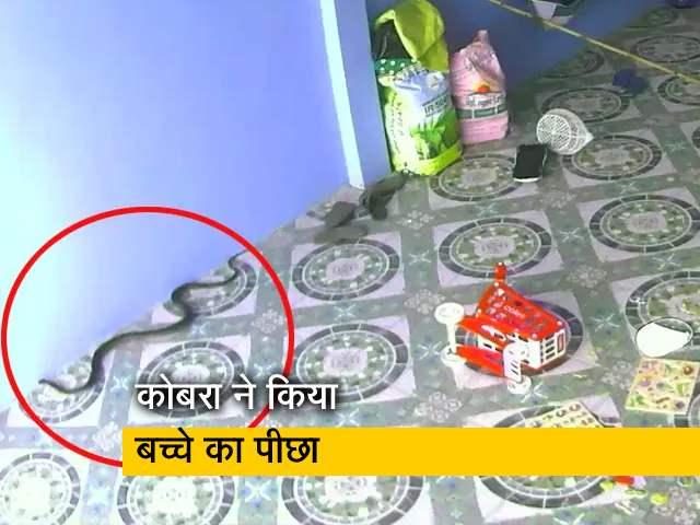 Videos : बच्चे के पीछे आया कोबरा, देखें रोंगटे खड़े कर देने वाला वीडियो