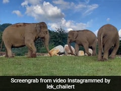 Watch: Elephant Guides Friend Who Can't See In Heartwarming Clip
