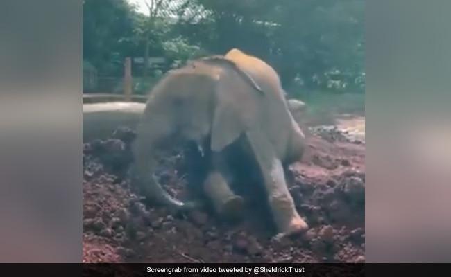हाथी ने मिट्टी में यूं खाईं कलाबाज़ियां, नटखट अंदाज़ देख लोग बोले-Awww...,देखें Video