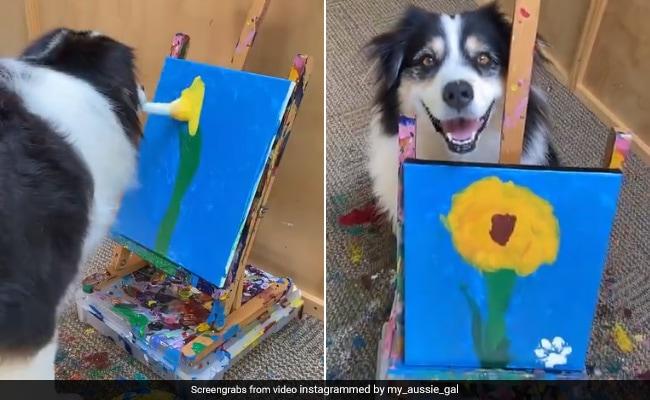 कुत्ते ने मुंह से ब्रश पकड़कर बनाई सुंदर फूल की पेंटिंग, देखकर हैरान हुए लोग, बोले- क्या सच में इसने बनाया है ? - देखें पूरा Video