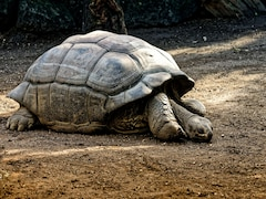 Maharashtra Man Booked For Demanding Tortoise With 21 Toenails, Black Labrador As Dowry