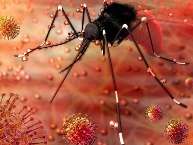 Video : Kerala Reports First Zika Virus Infection This Year, Samples Sent To Pune